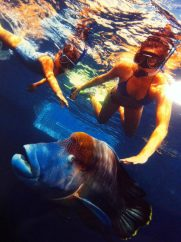 great barrier reef cairns and huge fish snorkling