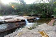 sydney national forest