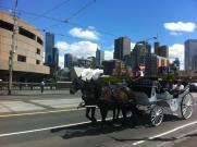 Horses Melbourne Australia