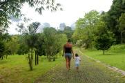 koh sok forest thailand